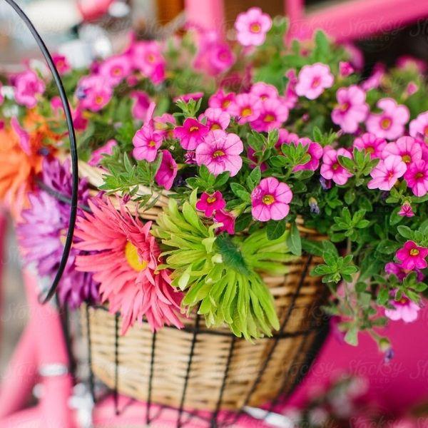 flowering-plant-gowrivakkam-chennai