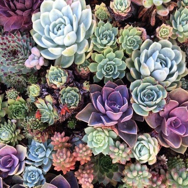 succulents-colour-plants