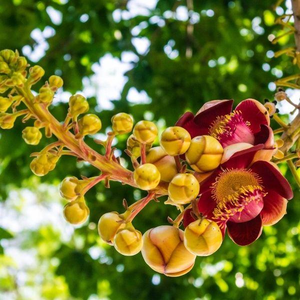 temple-tree-mahindracity