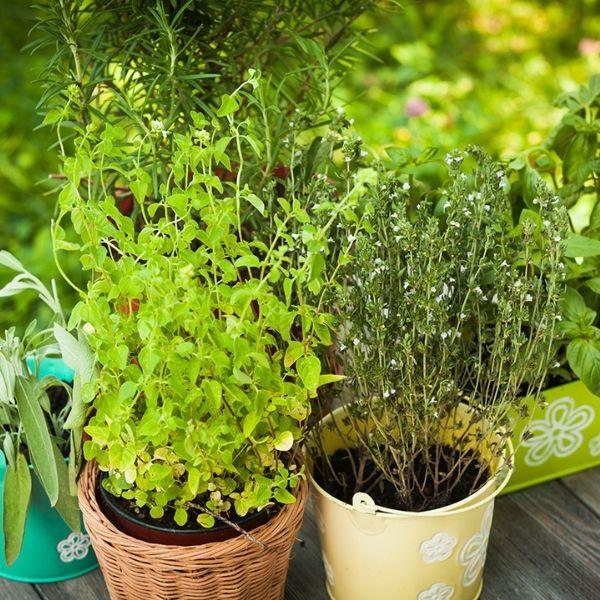 herbs-medicinal-plant